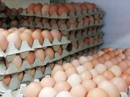 Bio-Eier aus der Landwirtschaft in Attl